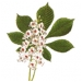 White Chestnut - Helps to remove unwanted thoughts - 20ml